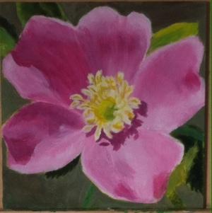 10.05.15 Wild Rose
